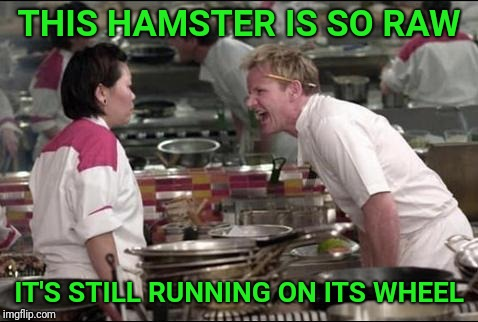 Angry Chef Gordon Ramsay | THIS HAMSTER IS SO RAW IT'S STILL RUNNING ON ITS WHEEL | image tagged in memes,angry chef gordon ramsay,hamster weekend,hamster | made w/ Imgflip meme maker
