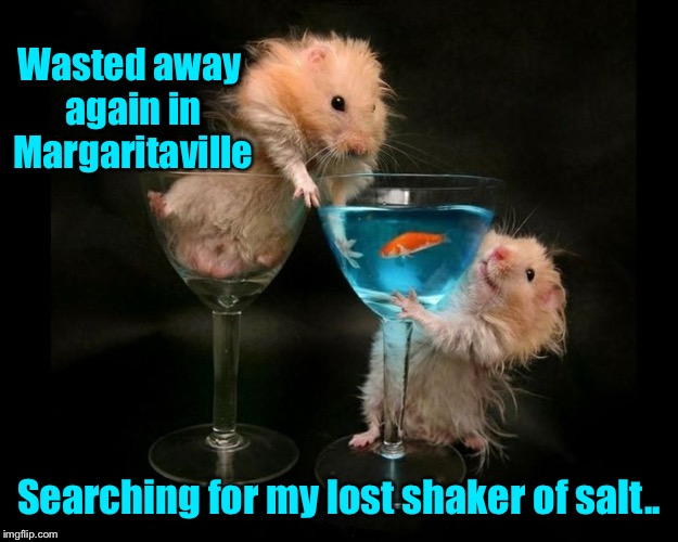 What happens in Margaritaville, stays in Margaritaville  | Wasted away again in Margaritaville Searching for my lost shaker of salt.. | image tagged in funny memes,hamster,hamster weekend,margarita,margaritaville | made w/ Imgflip meme maker