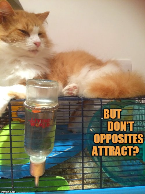 BUT          DON'T   OPPOSITES ATTRACT? | made w/ Imgflip meme maker