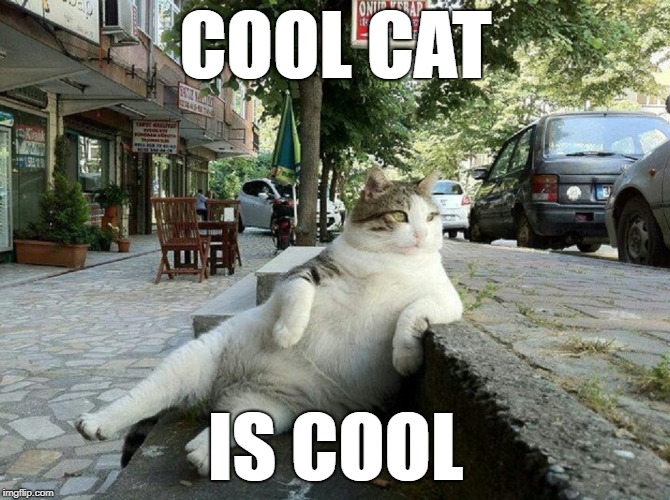 cool cat is cool | COOL CAT IS COOL | image tagged in cool,cat,cool cat | made w/ Imgflip meme maker