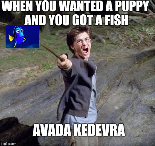 Harry potter | WHEN YOU WANTED A PUPPY AND YOU GOT A FISH AVADA KEDEVRA | image tagged in harry potter | made w/ Imgflip meme maker