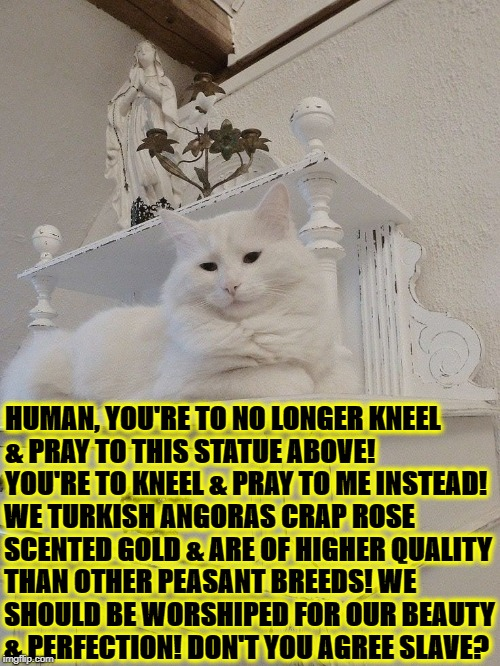 HUMAN, YOU'RE TO NO LONGER KNEEL & PRAY TO THIS STATUE ABOVE! YOU'RE TO KNEEL & PRAY TO ME INSTEAD! WE TURKISH ANGORAS CRAP ROSE SCENTED GOL | image tagged in turkish angoras r turds | made w/ Imgflip meme maker