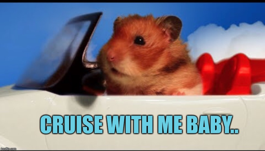 CRUISE WITH ME BABY.. | made w/ Imgflip meme maker