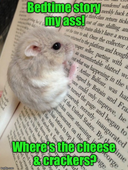 Hamster Weekend! The End | Bedtime story my ass! Where's the cheese & crackers? | image tagged in memes,hamster weekend,bedtime story,cheese  crackers,the end,funny memes | made w/ Imgflip meme maker