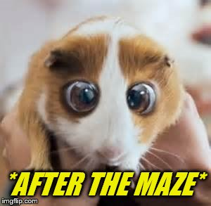 *AFTER THE MAZE* | made w/ Imgflip meme maker