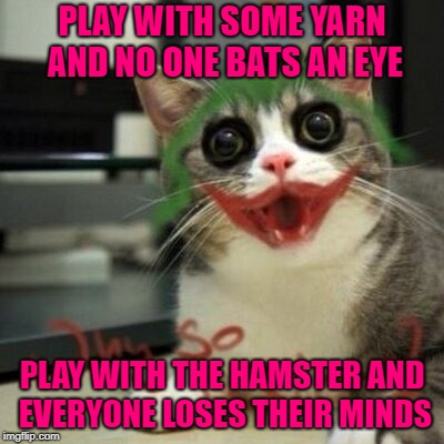 One more for Hamster Weekend July 6-8, a bachmemeguy2, 1forpeace & Shen_Hiroku_Nagato event! | PLAY WITH SOME YARN AND NO ONE BATS AN EYE PLAY WITH THE HAMSTER AND EVERYONE LOSES THEIR MINDS | image tagged in joker cat,memes,hamster,funny,hamster weekend,animals | made w/ Imgflip meme maker