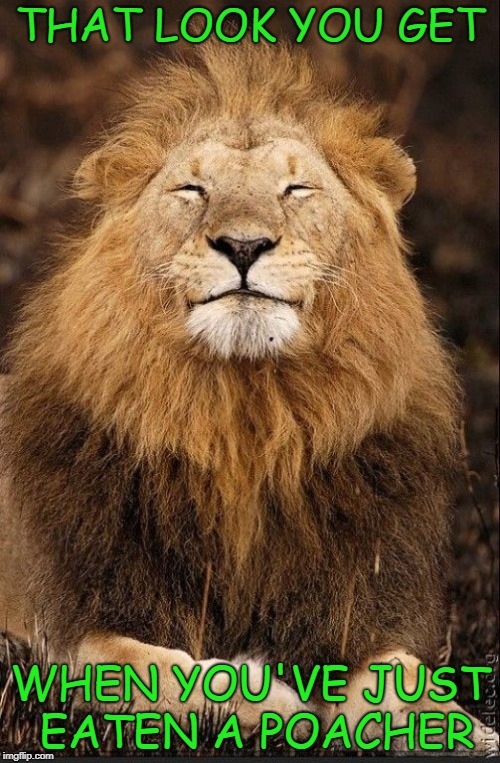 I have no sympathy for those poachers being somewhere they didn't belong!!! | THAT LOOK YOU GET WHEN YOU'VE JUST EATEN A POACHER | image tagged in lion smiling,memes,poachers,easy lunch,funny,wildlife | made w/ Imgflip meme maker