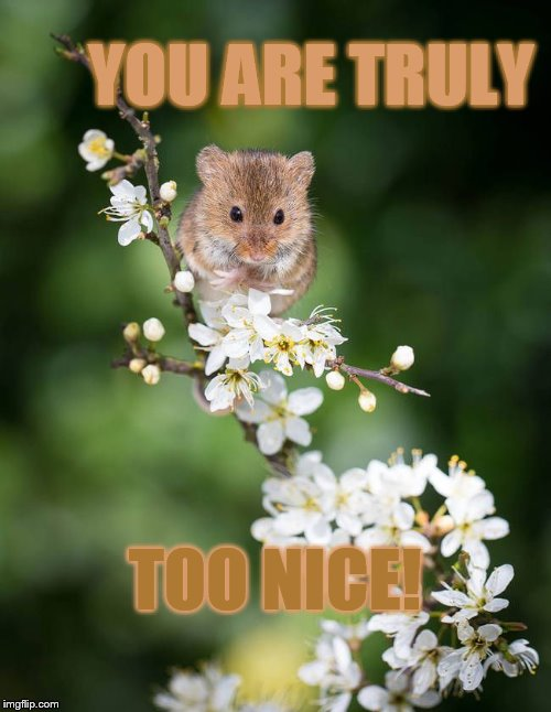 YOU ARE TRULY TOO NICE! | made w/ Imgflip meme maker