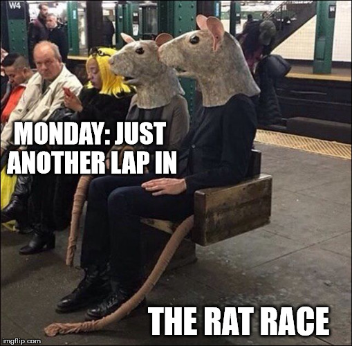 How many more Mondays do you have to endure til you can tell the rat race to bugger off? |  MONDAY: JUST ANOTHER LAP IN; THE RAT RACE | image tagged in rat race,the rats are winning | made w/ Imgflip meme maker