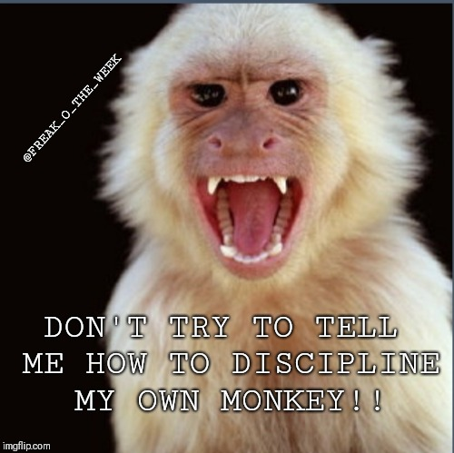 DON'T TRY TO TELL ME HOW TO DISCIPLINE MY OWN MONKEY!! @FREAK_O_THE_WEEK | image tagged in bad monkey | made w/ Imgflip meme maker