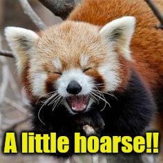 Rofl Red Panda | A little hoarse!! | image tagged in rofl red panda | made w/ Imgflip meme maker