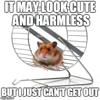 Hamster Labour | IT MAY LOOK CUTE AND HARMLESS BUT I JUST CAN'T GET OUT | image tagged in hamster wheel,hamster weekend,funny,slavery,memes | made w/ Imgflip meme maker
