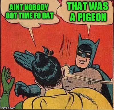 Batman Slapping Robin Meme | AINT NOBODY GOT TIME FO DAT THAT WAS A PIGEON | image tagged in memes,batman slapping robin | made w/ Imgflip meme maker