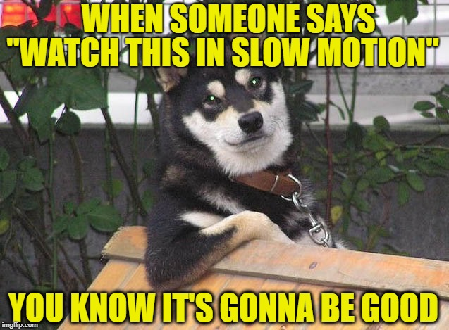 "Retrospective Dog | WHEN SOMEONE SAYS ""WATCH THIS IN SLOW MOTION"" YOU KNOW IT'S GONNA BE GOOD 