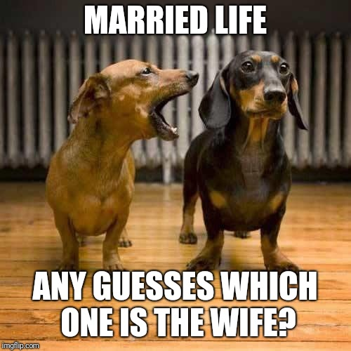 Married life | MARRIED LIFE ANY GUESSES WHICH ONE IS THE WIFE? | image tagged in married life | made w/ Imgflip meme maker