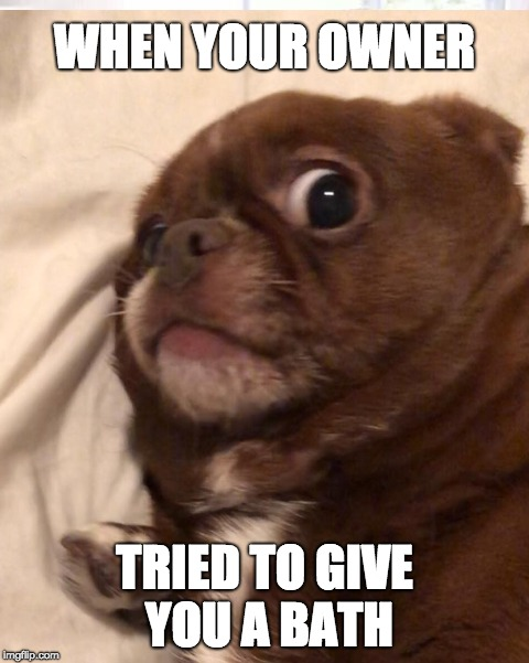 Sprout |  WHEN YOUR OWNER; TRIED TO GIVE YOU A BATH | image tagged in sprout,chug | made w/ Imgflip meme maker