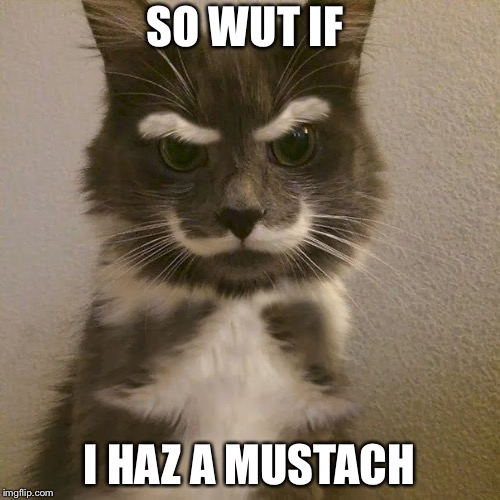 SO WUT IF I HAZ A MUSTACH | image tagged in memes,that's just silly cat,kitty | made w/ Imgflip meme maker
