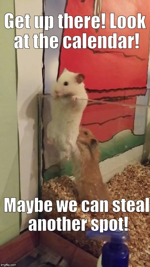 Escape hamsters | Get up there! Look at the calendar! Maybe we can steal another spot! | image tagged in escape hamsters | made w/ Imgflip meme maker