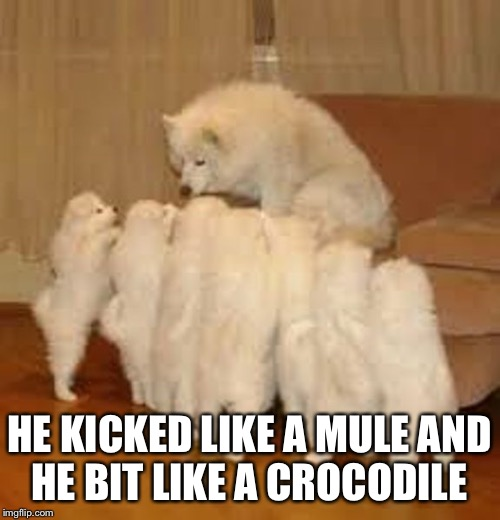 Storytelling Dog 2 | HE KICKED LIKE A MULE AND HE BIT LIKE A CROCODILE | image tagged in storytelling dog 2 | made w/ Imgflip meme maker