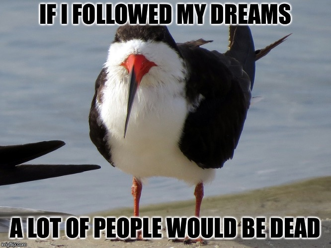 Even Less Popular Opinion Bird | IF I FOLLOWED MY DREAMS A LOT OF PEOPLE WOULD BE DEAD | image tagged in even less popular opinion bird | made w/ Imgflip meme maker