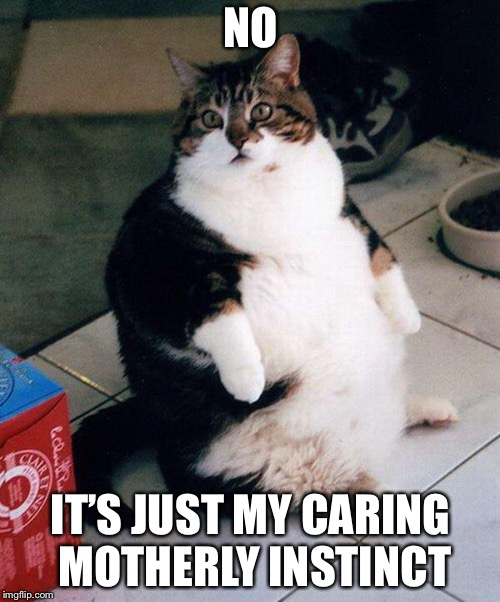 fat cat | NO IT'S JUST MY CARING MOTHERLY INSTINCT | image tagged in fat cat | made w/ Imgflip meme maker