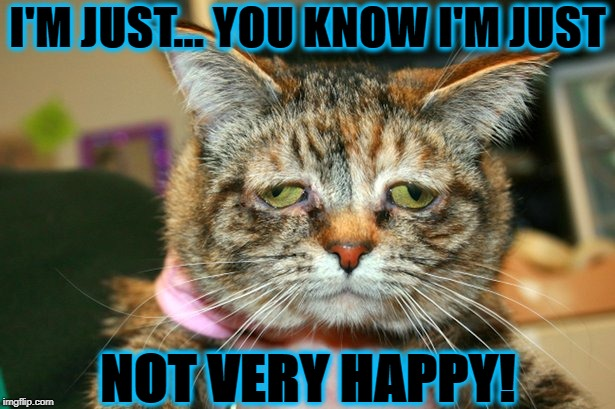 I'M JUST... YOU KNOW I'M JUST NOT VERY HAPPY! | image tagged in unhappy cat | made w/ Imgflip meme maker