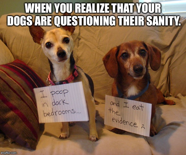 WHEN YOU REALIZE THAT YOUR DOGS ARE QUESTIONING THEIR SANITY. | image tagged in dats disgusting | made w/ Imgflip meme maker