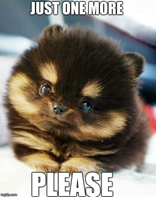 Too cute to refuse | JUST ONE MORE PLEASE | image tagged in cute eyes animal,cute | made w/ Imgflip meme maker