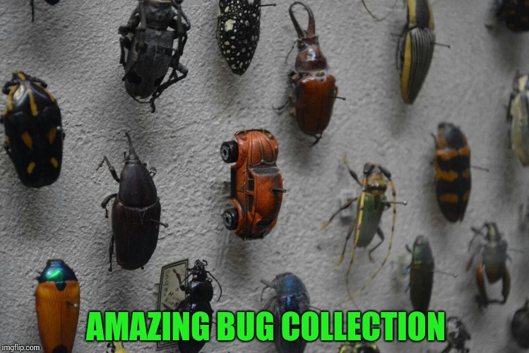 Some bugs are hard to find |  AMAZING BUG COLLECTION | image tagged in bug,volkswagen,collection,pipe_picasso | made w/ Imgflip meme maker