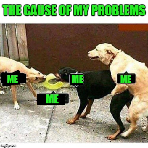 Me meme | ME ME ME ME THE CAUSE OF MY PROBLEMS | image tagged in funny dogs | made w/ Imgflip meme maker