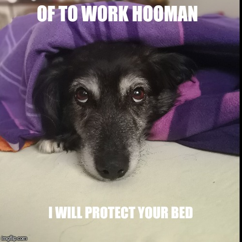 OF TO WORK HOOMAN | I WILL PROTECT YOUR BED | image tagged in funny,demotivationals | made w/ Imgflip demotivational maker