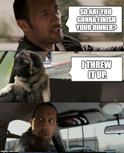 Rock driving Pug | SO ARE YOU GONNA FINISH YOUR DINNER? I THREW IT UP. | image tagged in rock driving pug,throwing,dinner,puke | made w/ Imgflip meme maker