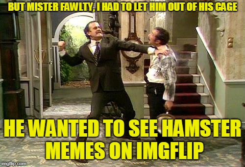 Hamster Weekend just wouldn't be complete without a reference to Manuel from Fawlty Towers | BUT MISTER FAWLTY, I HAD TO LET HIM OUT OF HIS CAGE HE WANTED TO SEE HAMSTER MEMES ON IMGFLIP | image tagged in fawlty towers,memes,basil fawlty,manuel,hamster weekend,is not rat is hamster | made w/ Imgflip meme maker