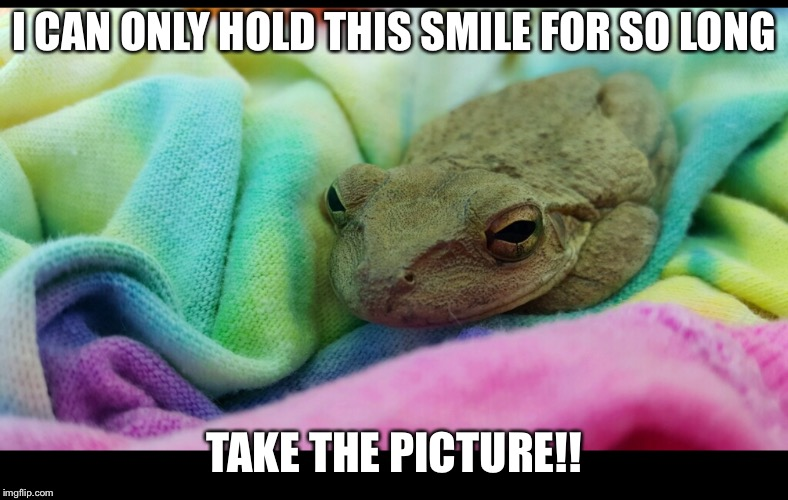 Smiling frog | I CAN ONLY HOLD THIS SMILE FOR SO LONG TAKE THE PICTURE!! | image tagged in frog | made w/ Imgflip meme maker