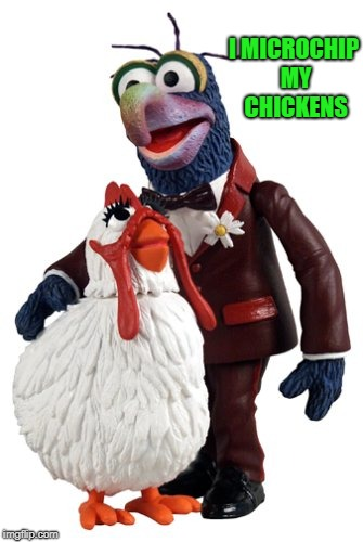 I MICROCHIP MY CHICKENS | image tagged in gonzo | made w/ Imgflip meme maker