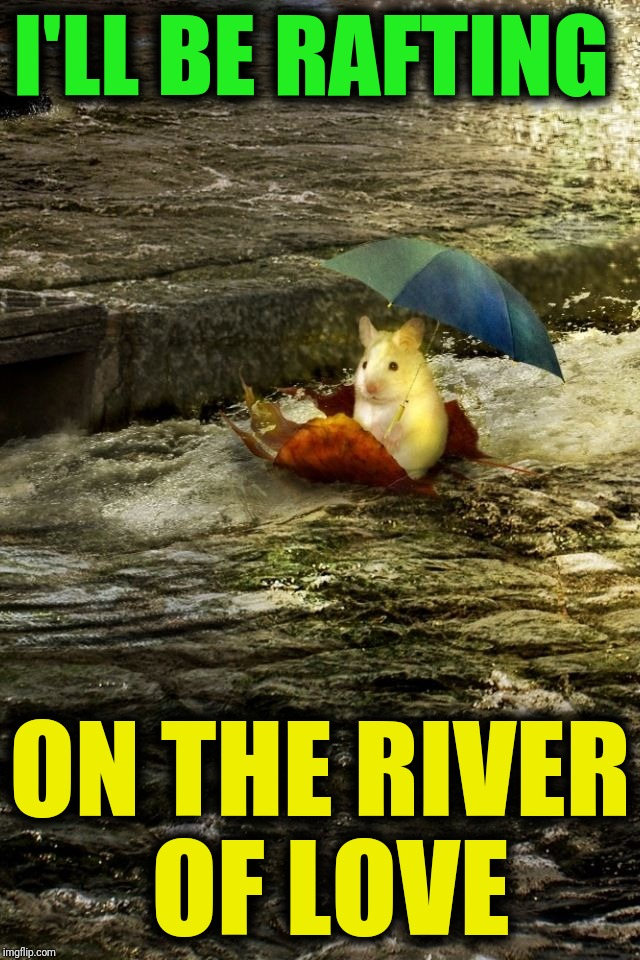 Thank you for the best weekend ever!  I'm nothing but Hamsters of Love over here ~^^~ |  I'LL BE RAFTING; ON THE RIVER OF LOVE | image tagged in hamster weekend,hamsters of love,rafting,nothing to see here,thank you,gratitude | made w/ Imgflip meme maker