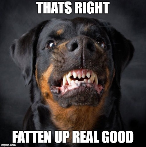 Rottweiler | THATS RIGHT FATTEN UP REAL GOOD | image tagged in rottweiler | made w/ Imgflip meme maker