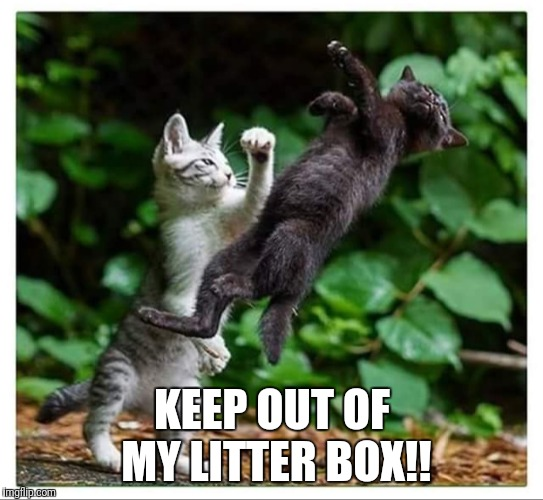 Keep out of my litter box! | KEEP OUT OF MY LITTER BOX!! | image tagged in funny cat,funny litter box,funny cats fighting | made w/ Imgflip meme maker