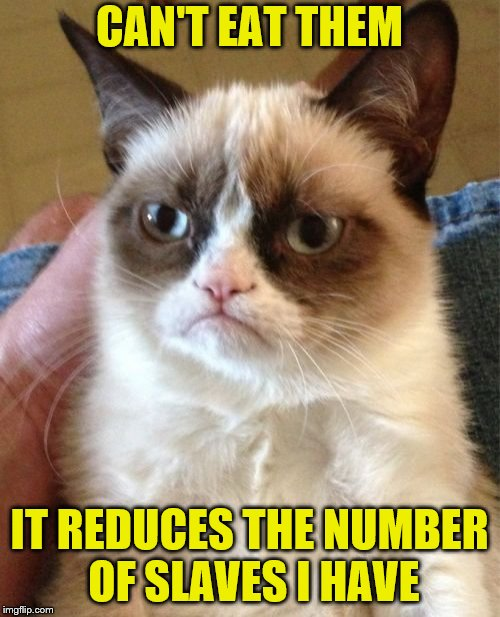 Grumpy Cat Meme | CAN'T EAT THEM IT REDUCES THE NUMBER OF SLAVES I HAVE | image tagged in memes,grumpy cat | made w/ Imgflip meme maker