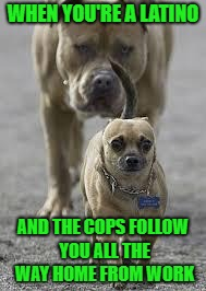 I work across the street from a police station so I get followed by cops all the time...LOL | WHEN YOU'RE A LATINO AND THE COPS FOLLOW YOU ALL THE WAY HOME FROM WORK | image tagged in big dog little dog,memes,paranoia,funny,dogs,animals | made w/ Imgflip meme maker