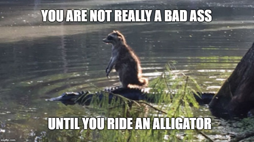 Raccoon on Alligator | YOU ARE NOT REALLY A BAD ASS UNTIL YOU RIDE AN ALLIGATOR | image tagged in raccoon,alligator,badass | made w/ Imgflip meme maker