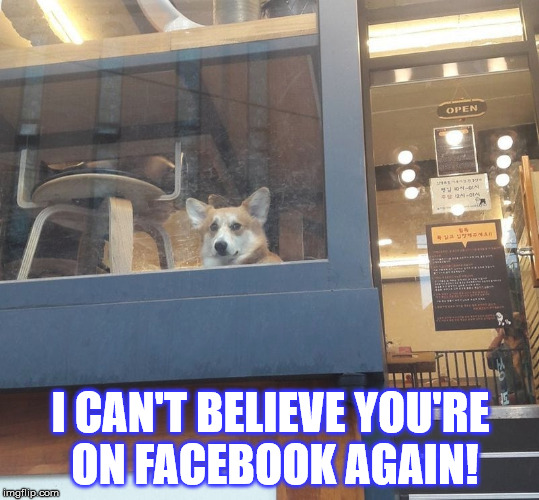 I CAN'T BELIEVE YOU'RE ON FACEBOOK AGAIN! | image tagged in mischievous corgi maybe i'll | made w/ Imgflip meme maker