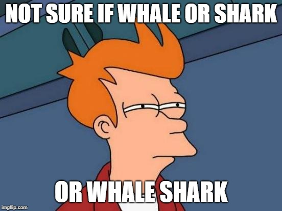 Futurama Fry Meme | NOT SURE IF WHALE OR SHARK OR WHALE SHARK | image tagged in memes,futurama fry | made w/ Imgflip meme maker