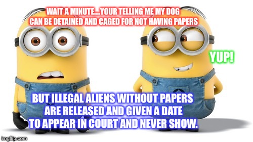 WAIT A MINUTE....YOUR TELLING ME MY DOG CAN BE DETAINED AND CAGED FOR NOT HAVING PAPERS BUT ILLEGAL ALIENS WITHOUT PAPERS ARE RELEASED AND G | image tagged in minions | made w/ Imgflip meme maker
