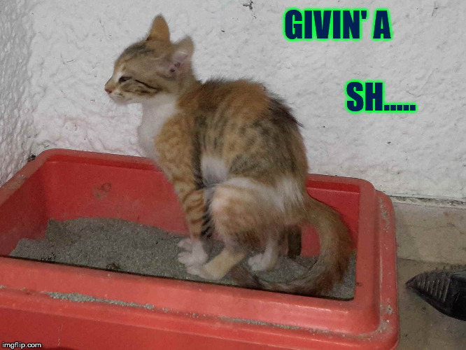 GIVIN' A SH..... | image tagged in givingashit cat kitten | made w/ Imgflip meme maker