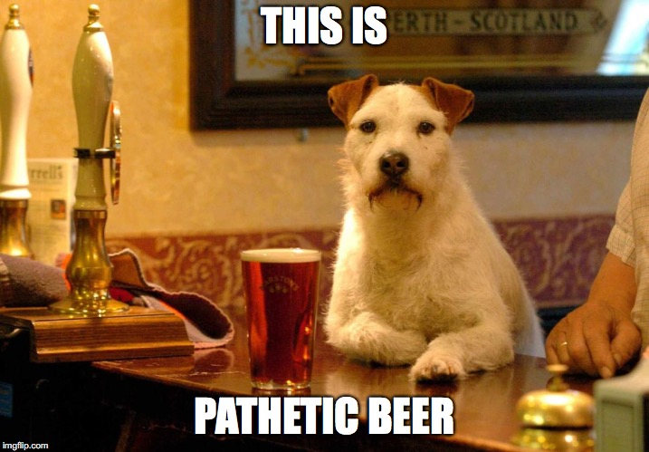 THIS IS PATHETIC BEER | image tagged in dog at bar | made w/ Imgflip meme maker