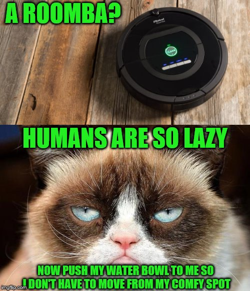 It's hard to find the comfy spot again after you get up ~Inspired by nopa | A ROOMBA? NOW PUSH MY WATER BOWL TO ME SO I DON'T HAVE TO MOVE FROM MY COMFY SPOT HUMANS ARE SO LAZY | image tagged in grumpy cat,memes,roomba,laziness | made w/ Imgflip meme maker