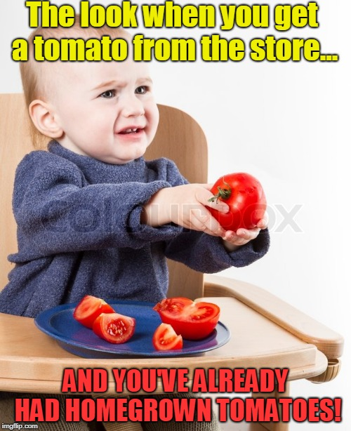 The look when you get a tomato from the store... AND YOU'VE ALREADY HAD HOMEGROWN TOMATOES! | image tagged in cranky baby with tomato | made w/ Imgflip meme maker