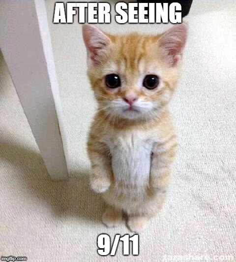 Cute Cat Meme | AFTER SEEING 9/11 | image tagged in memes,cute cat | made w/ Imgflip meme maker
