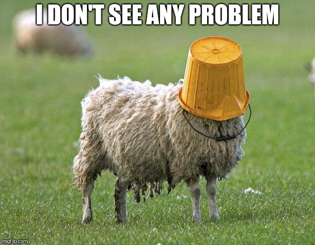 stupid sheep | I DON'T SEE ANY PROBLEM | image tagged in stupid sheep | made w/ Imgflip meme maker